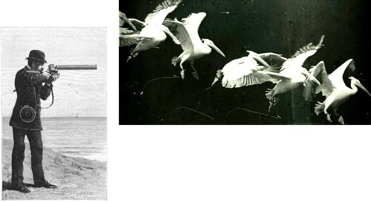 Ilustración de la pistola cronofotográfica y una foto de una secuencia de un pelícano volador.
